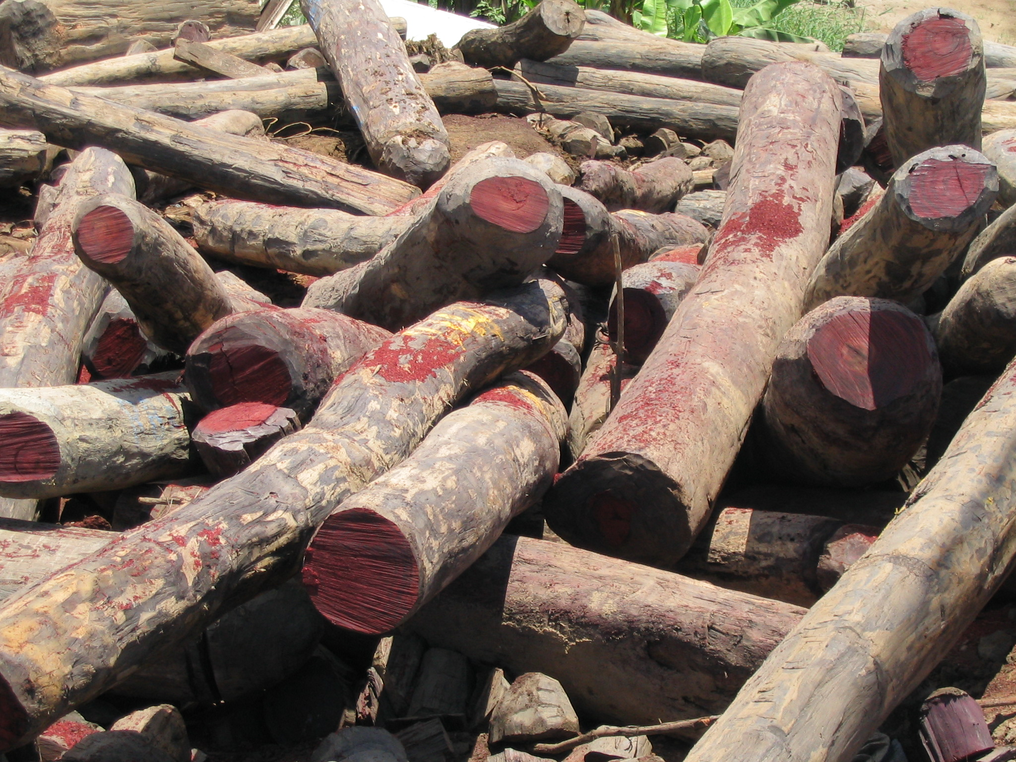 Illegal_rosewood_stockpiles_001.jpg